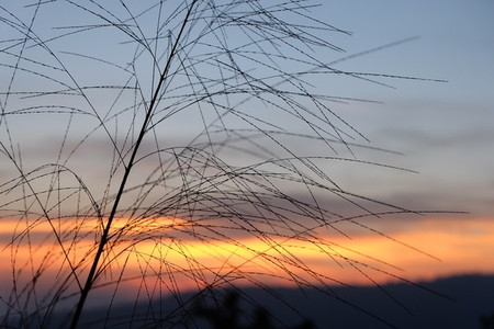Grass flower and sunset  02