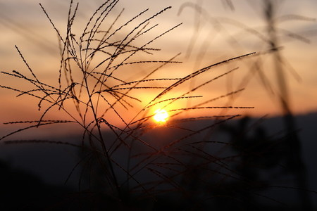 Grass flower and sunset 03