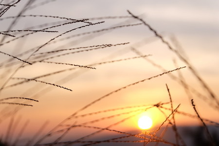 Grass flower and sunset  04
