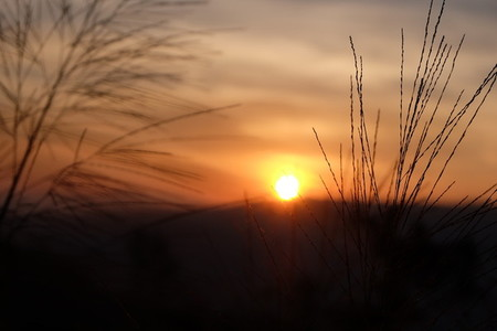 Grass flower and sunset  05