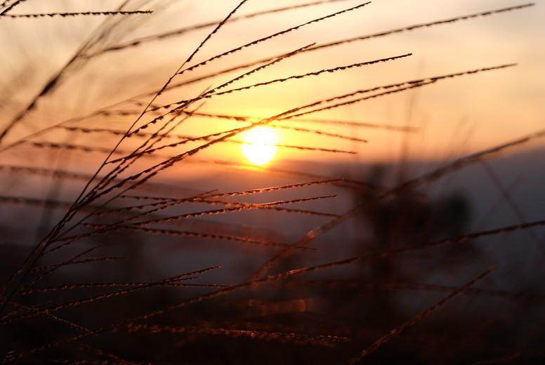 Grass flower and sunset  06