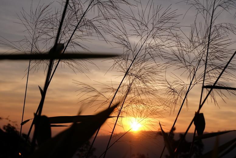 Grass flower and sunset  07