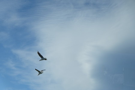 Two seagulls soaring in the sky