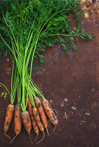 Bunch of fresh garden carrots over grunge rusty metal backdrop  top view
