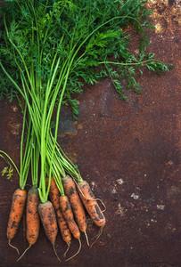Bunch of fresh garden carrots over grunge rusty metal backdrop  top view