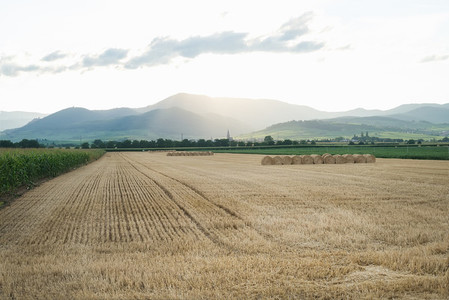 Summer wheat field with haystacks and mountains on the horizon at sunset time after a harvest Alsase region France