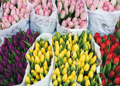 Colorful tulips at flower market