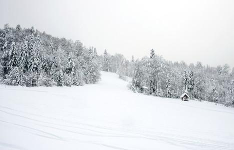 Ski slopes in the coniferous forest in  Kolasin 1450  mountain s
