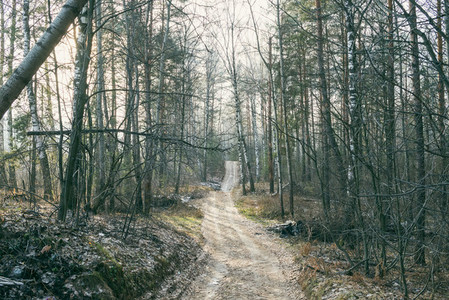 Country road crossing the forest