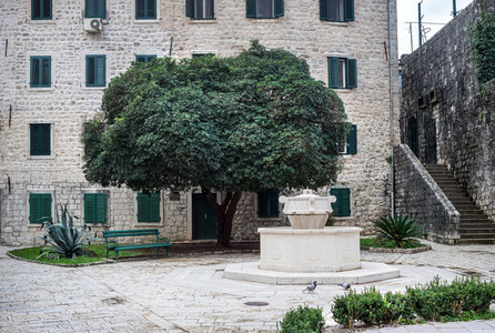 Tree in the central old town square of Kotor