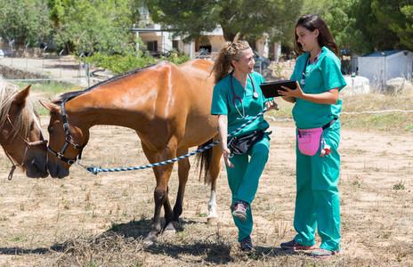 Veterinary on a farm