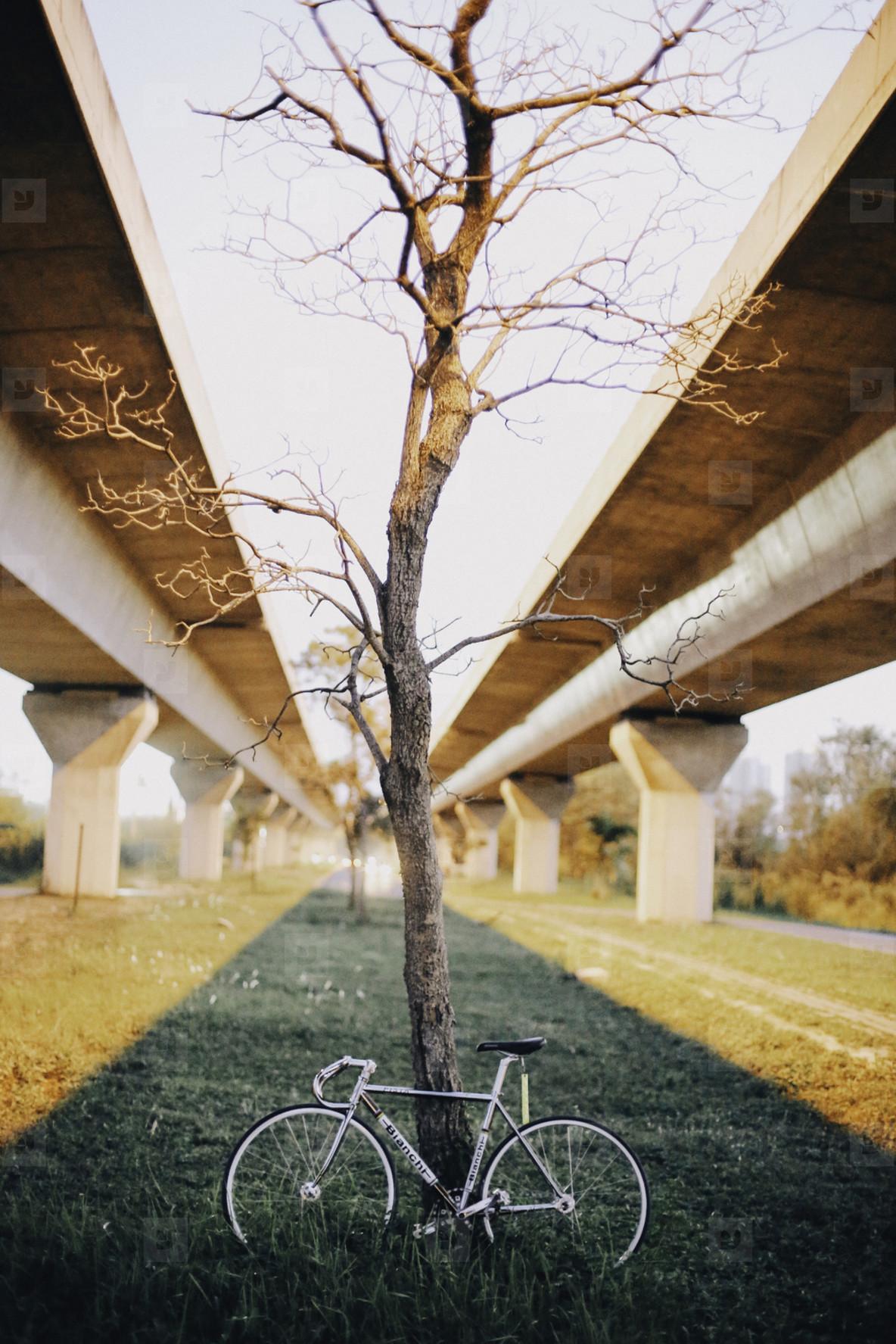 Retro fixed gear bike and tree