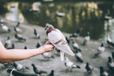Pigeon on the hand