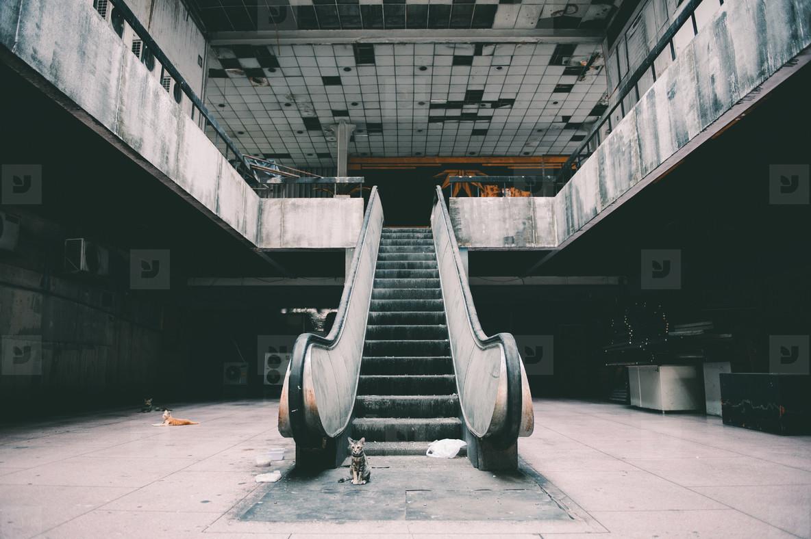 Damaged escalators