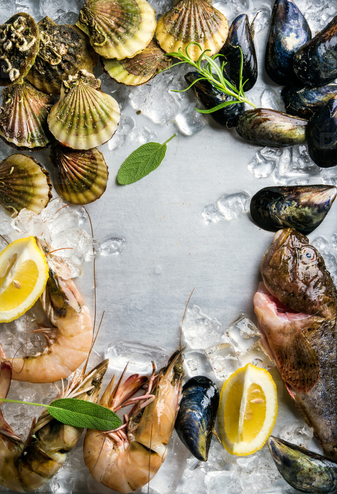 Fresh seafood with herbs and lemon on ice  Prawns  fish  mussels  scallops over steel metal background  Top view  copy space