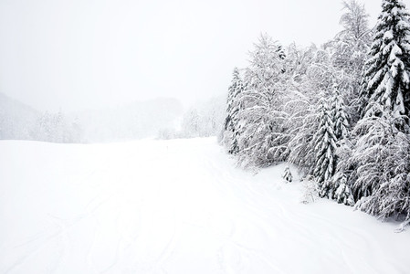 Ski slopes  coniferous forest in  Kolasin 1450  mountain s