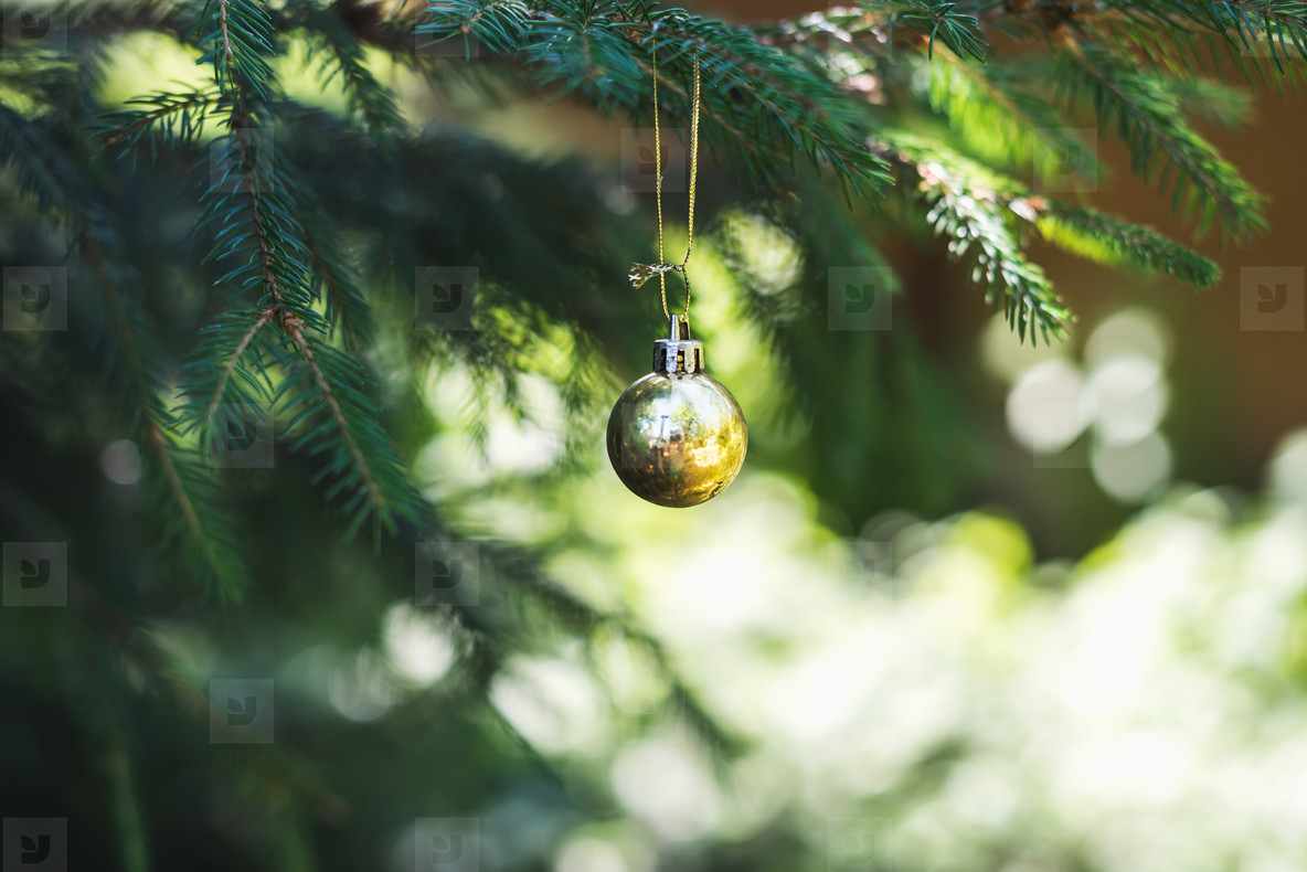 Christmas golden toy ball hanging on branch of a fur tree