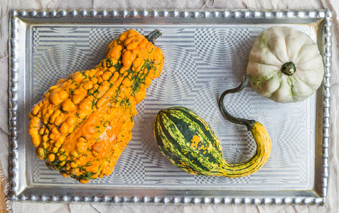 Pumpkins of crazy shapes on a silver tray