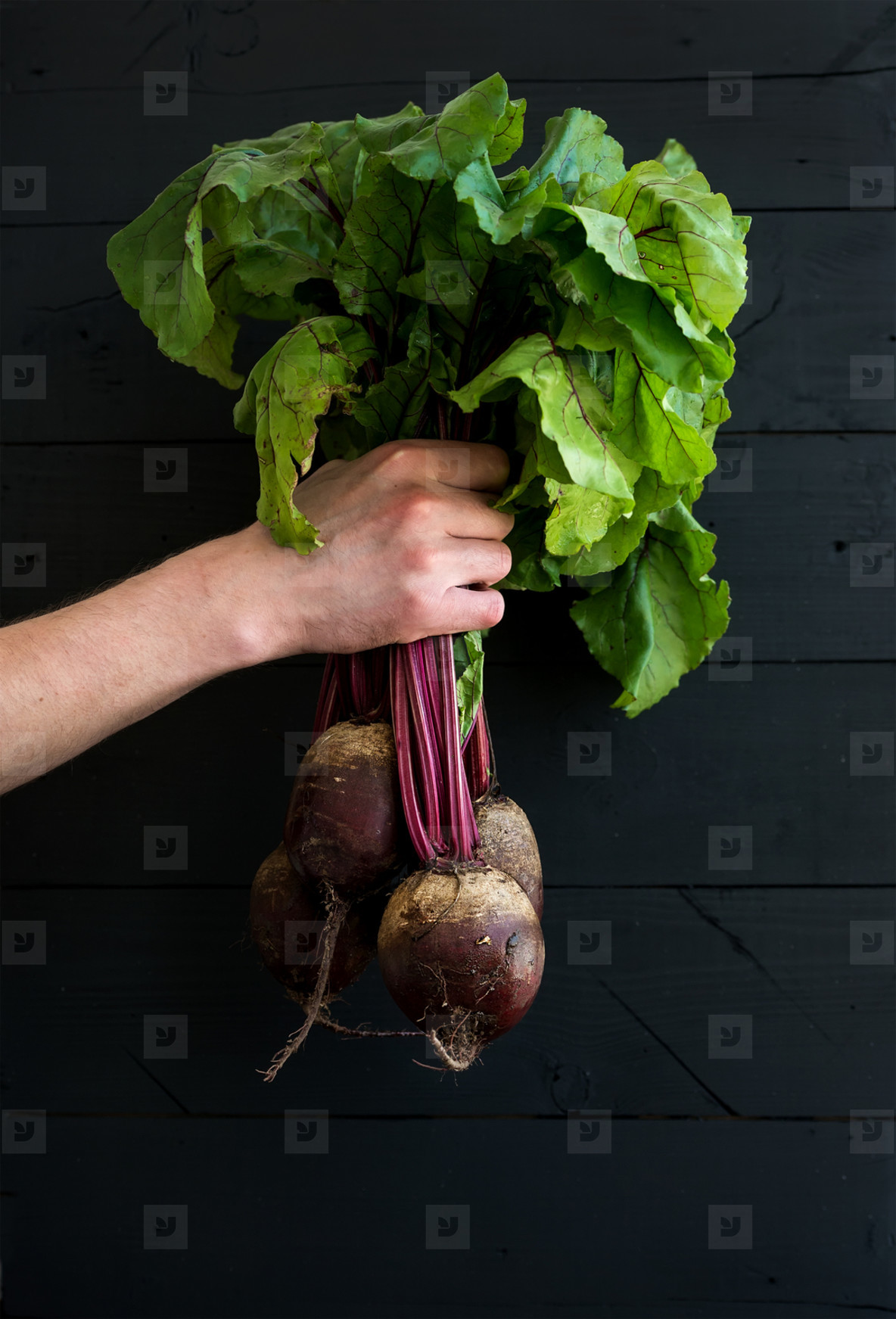Bunch of fresh garden beetroot kept in man s hand  black wooden backdrop