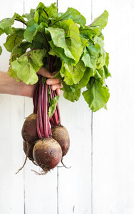 Bunch of fresh garden beetroot kept in man s hand  white wooden backdrop