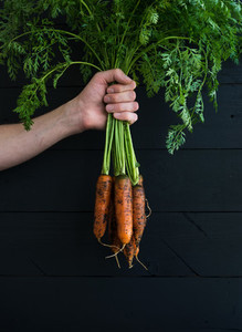 Bunch of fresh garden carrots with green leaves in the hand  black wooden backdrop