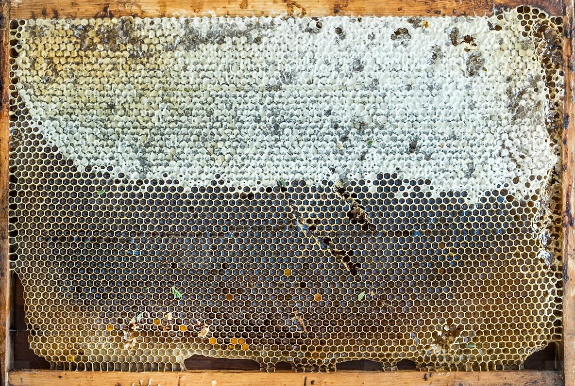 Fresh organic village honey in honeycombs  top view