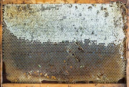 Fresh organic village honey in honeycombs  top view