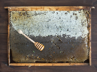 Fresh organic village honey in honeycombs with stick