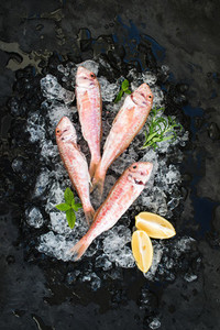Raw Red Mullet fish with lemon  mint and rosemary on chipped ice over dark stone backdrop