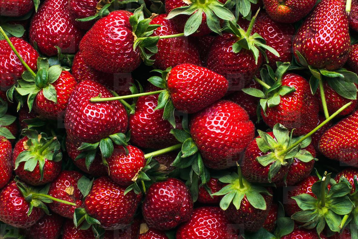 Freshly harvested ripe strawberries  top view