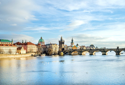 The view over the Vltava river  Charles bridge and white swans f