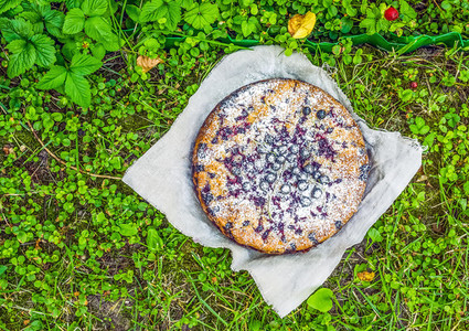 Black currant cake on green grass
