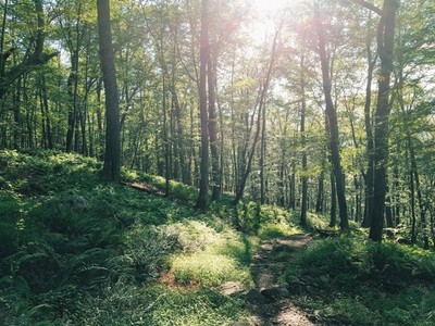 Fern trail and sunlight