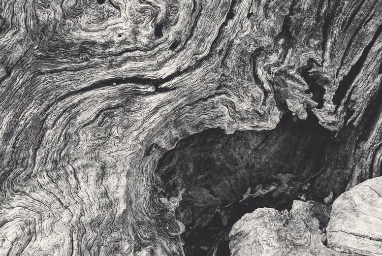 Stump wood grain