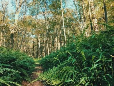 The fern trail