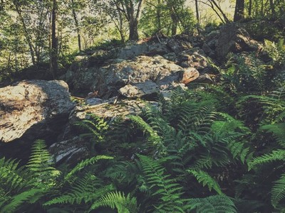Rocks and ferns