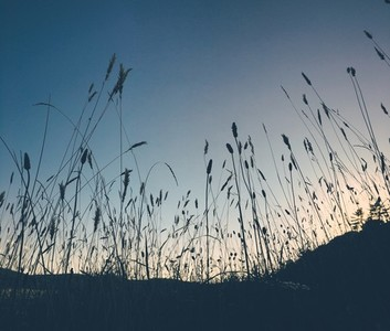 Grass at sunset