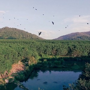 Birds flying over a valley