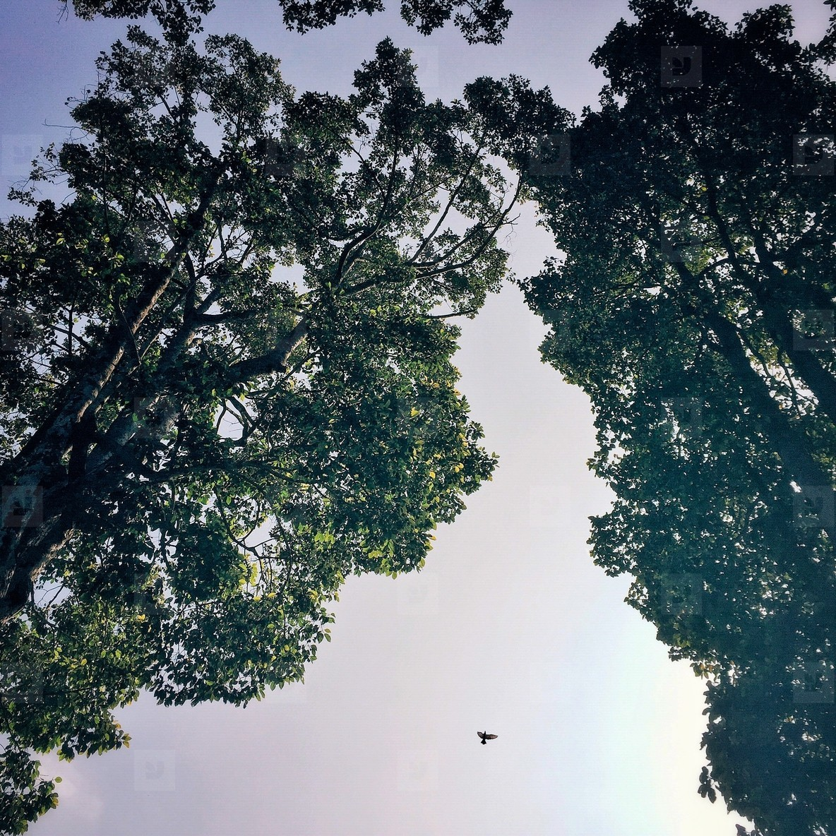 Against trees with flying bird