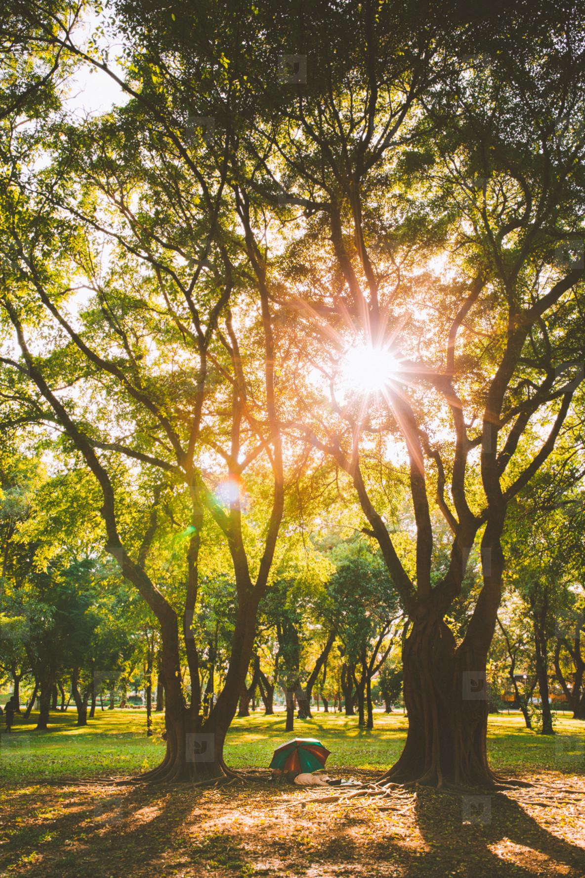 Sunlight yellow autumn tree