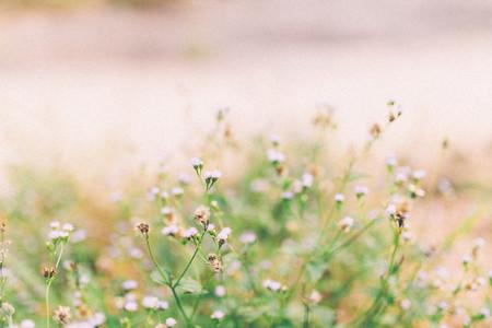 Grass flowers