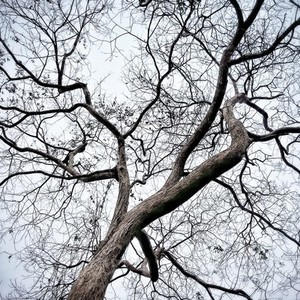Dry Branches of a tree
