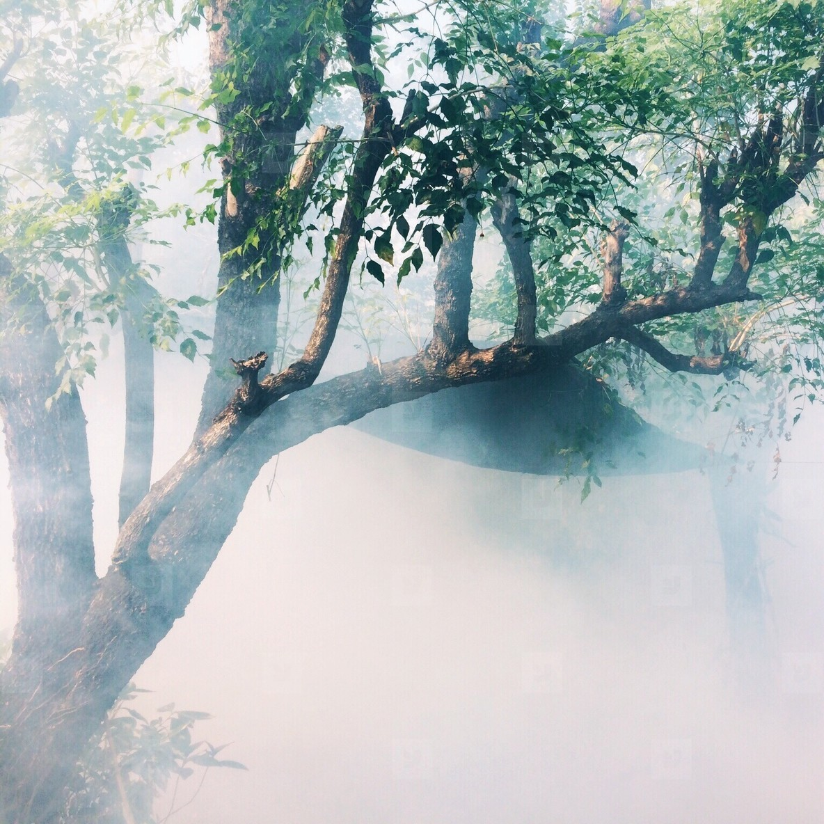 Misty autumn forest tree