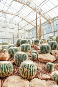 Cactus in the garden