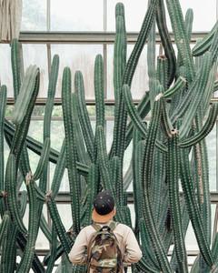 Large green cactus