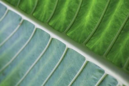 tropical plant texture