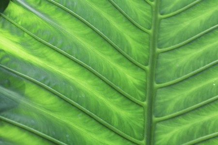 tropical plant texture