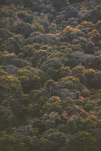 Forest treetops on the mountain