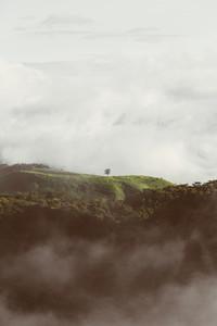 Morning Mist  02