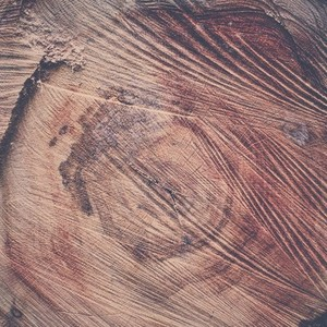 tree rings and saw scores